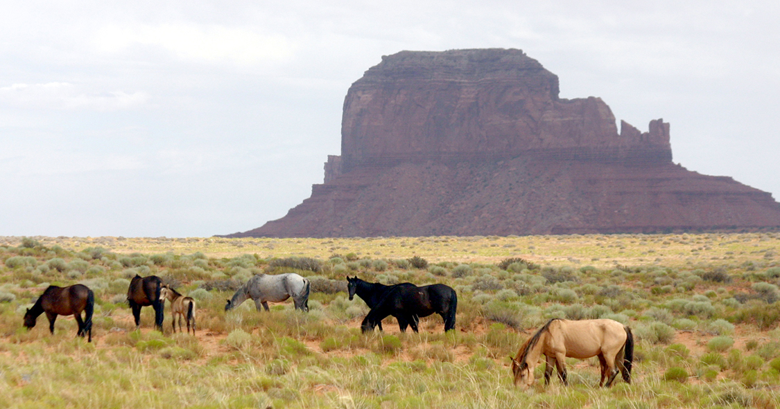 Monument Valley and Mustangs