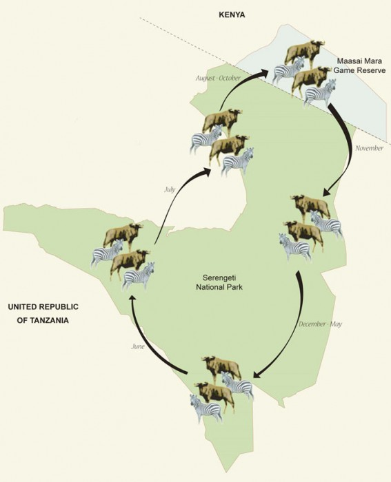 Safari Serengeti Map {focus_keyword} Migrate with the Migration Safari Kenya & Tanzania Safari map